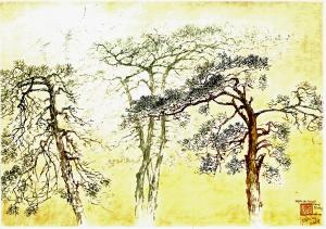Thông cao nguyên Lang Biang - Đà lạt